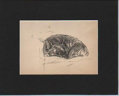 French Bulldog Dog Puppy Relaxing 1937 Lucy Dawson 8x12 Inch Sepia Matted Print