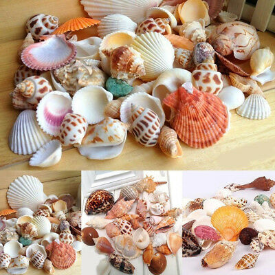 Craft Shells Sea Natural Beach Mixed Table Wedding Decoration Hot Sale