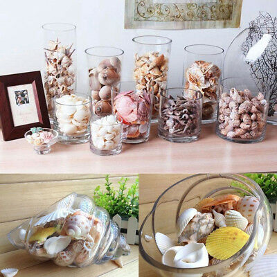 Fashion Mixed Beach Sea Shell Natural Craft Shell Aquarium Decor Various Pattern