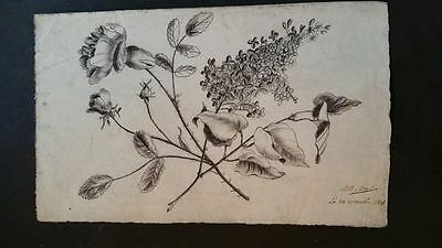 Early 19thC (1806) French signed charcoal fine quality botanical sketch