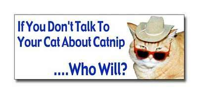 "Kitty Lover Gift BUMPER STICKER ""Talk To Your Cat About Catnip"" with Bob The Cat"