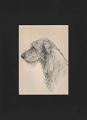 Vintage Irish Wolfhound Portrait Dog Print 1938 by K.F. Barker Matted 9X12