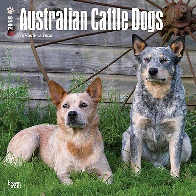 Australian Cattle Dogs 2018 Wall Calendar by Browntrout NEW Postage Included!