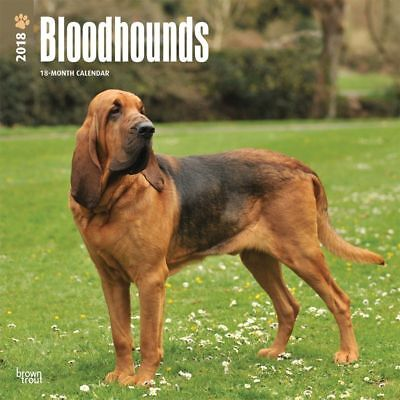 Bloodhounds 2018 Wall Calendar by Browntrout NEW Postage Included!