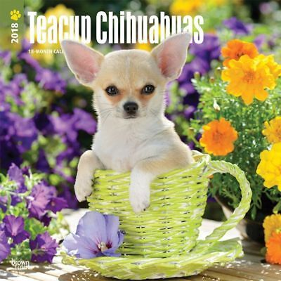 Chihuahuas, Teacup 2018 Wall Calendar by Browntrout NEW - Postage Included