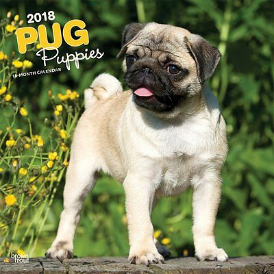 Pug Puppies 2018 Wall Calendar by Browntrout NEW Postage Included