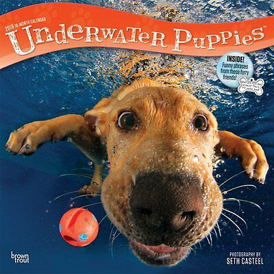 Underwater Puppies 2018 Wall Calendar by Browntrout NEW Postage Included!