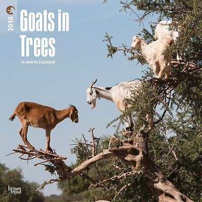 Goats in Trees 2018 Wall Calendar by Browntrout NEW - Postage Included