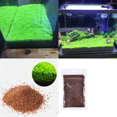 Aquarium Plant Seeds Aquatic Double Leaf Carpet Water Foreground Grass Fish Tank
