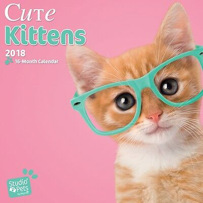 Cute Kittens 2018 Mini Wall Calendar by Browntrout, NEW, Free Postage