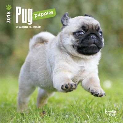Pug Puppies 2018 Mini Wall Calendar by Browntrout, NEW, Free Post