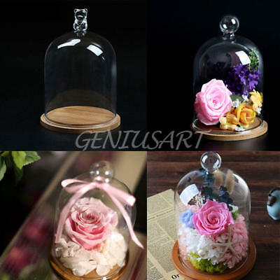 Wood Base Glass Display Cloche Bell Jar Dome Flower Immortal Preserve Vase Clear