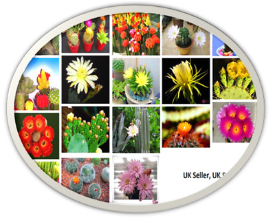 Multi Coloured cactus Seeds Garden Plant, UK Seller UK Cactus seeds