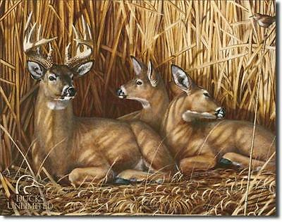 Ducks Unlimited Hideaway Deer Buck Does Fawns Hunting Tin Metal Sign