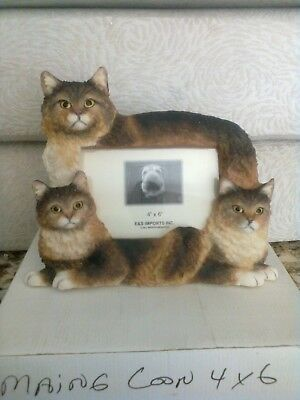 Maine Coon Cat Cats 4x6 Picture Frame Clearance Last One
