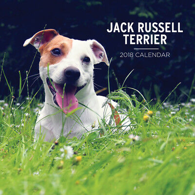 Jack Russell Terrier 2018 Wall Calendar by Paper Pocket, NEW, Free Post