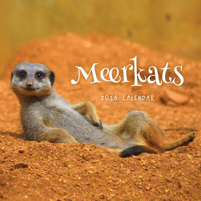 Meerkats 2018 Wall Calendar by Paper Pocket, NEW, Free Post