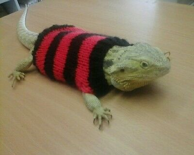 Jumper, clothing for small pets. Sweater for Bearded dragon, Lizard, Reptile.