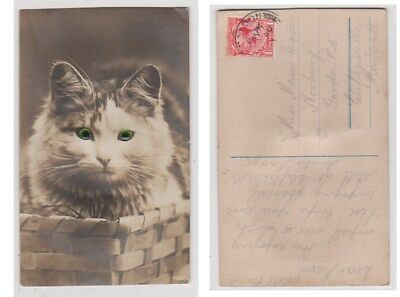 Early Postcard, Animals, Cats, Cat With Glass Eyes, 1930