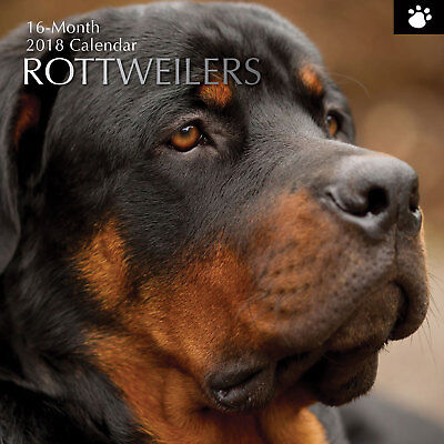Rottweilers 2018 Wall Calendar (Gifted Stationery) NEW, Postage Included