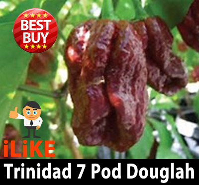 Trinidad 7 Pod Douglah Hot Chilli Seeds X 5 One of the hottest in the world