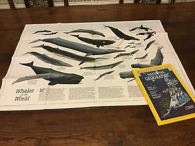 National Geographic December 1976 Whales Jackson Hole Early Man Torre Egger