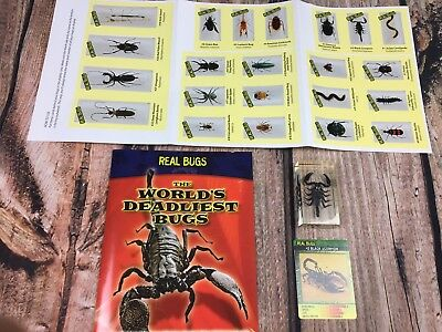 DeAgostini Real Bugs Scorpion in Resin Book Card Worlds Ugliest Bugs