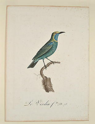 Vieillot and Audeberts 1802 Original Le Verdin Kolibri Hummingbird ornithology