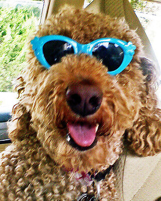 Happy Birthday From The Dog        Golden Doodle  Birthday Card
