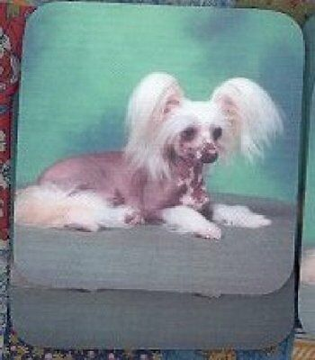 CHINESE CRESTED Rubber Backed Coasters #0887