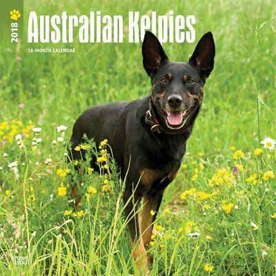 Australian Kelpies 2018 Wall Calendar by Browntrout NEW Postage Included