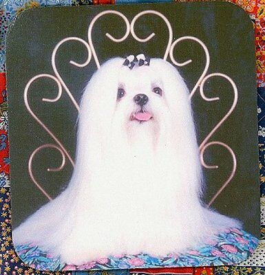 MALTESE Heavy Rubber Backed Mousepad #0634 Cute and Sassy!