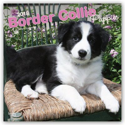 Border Collie Puppies 2018 Wall Calendar by Browntrout NEW Postage Included