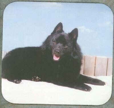 SCHIPPERKE Heavy Rubber Backed Mousepad #0686