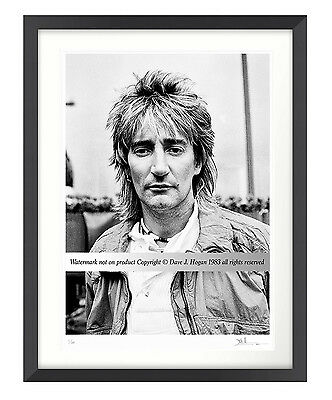 Rod Stewart Limited Edition Large Framed Fine Art Print - New & Rare 101/500