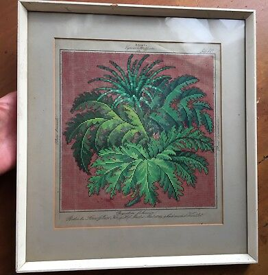 Louis Gluer Hand Coloured Ferns Embroidery Pattern 19Th C. Berlin 5610 Framed