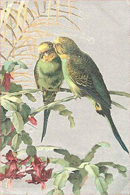 Vintage Bird Parakeets Budgies w Christmas Cactus 1910 8 New  Large Note Cards