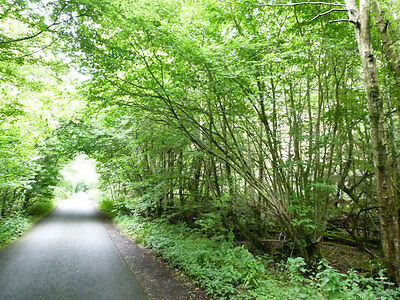 woodland for sale near Ashford Kent