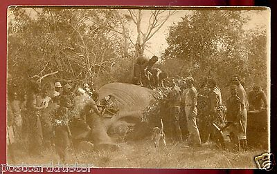 *530 - JOHANNESBURG South Africa 1923 Elephant Hunting Real Photo PC...(3-17)