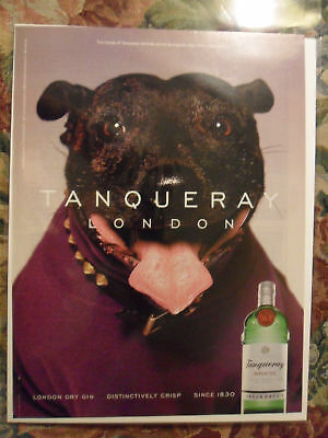 2001 Print Ad Tanqueray Gin ~ Pit Bull Dog with Spiked Collar