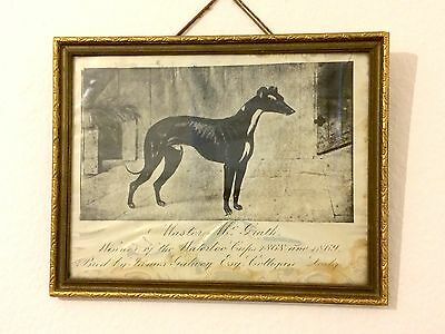 Antique Framed Print of Irish Greyhound Racing's Master McGrath