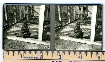 Long Tailed Monkey in Cage Original Stereoview  1930's