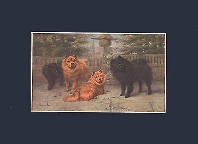 Antique Print 1907 Print Chow Chow Dogs by Maud Earl 9X12 Matted