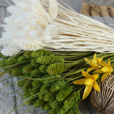 Bunch Of Home Decorations New Natural Gems grass Dried Flowers Wedding Flower