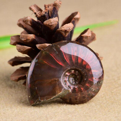 1PC Natural Iridescent Facet Fossil Ammonite Hanging Piece Lucky Crystal Stone