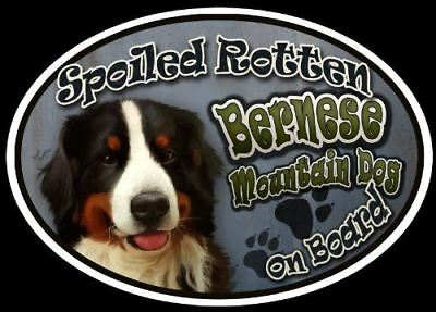 Bernese Mountain Dog - Spoiled Rotten Oval Dog Magnet for Cars
