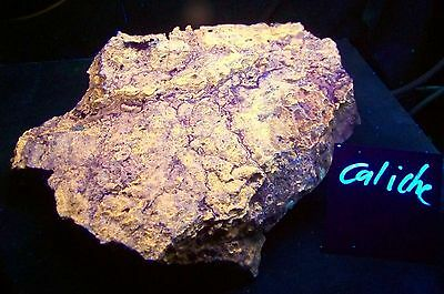 Huge Fluorescent Museum Size Caliche with Aragonite Mineral Collection Specimen