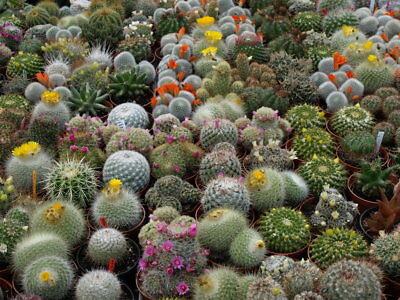 Cactus Seeds Mix, 400 Seeds