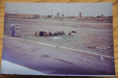 Iraqi Freedom OIF 1st Armored Photograph 3 x 5 Bedouin farmers with sheep