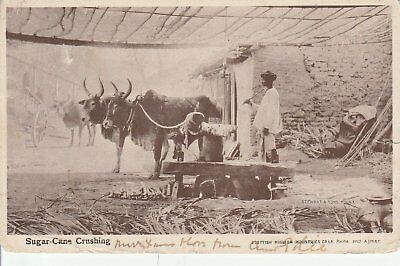 133 Postcard Sugar Can Crushing India